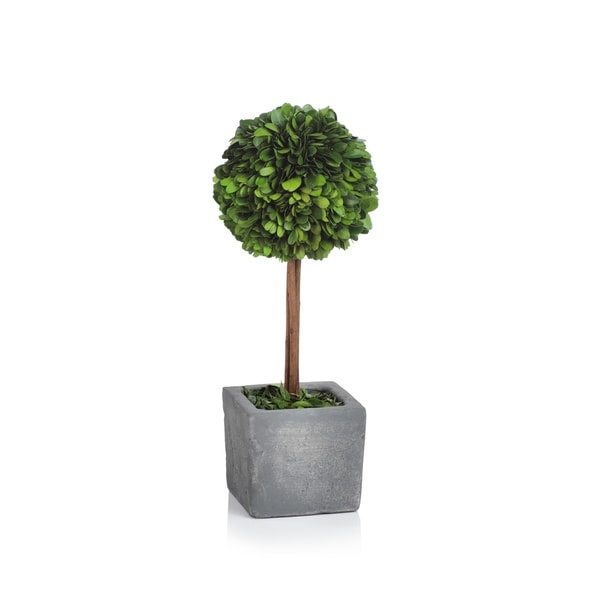 Verdell 16-Inch Tall Ball Boxwood Topiary - Green