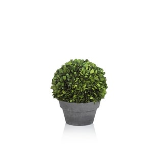 Verdell 9-Inch Tall Boxwood Topiary in Round Pot - Green