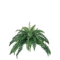 """Boston Fern Plant Stem - Green - 29""""L x 29""""W x 18""""H"""