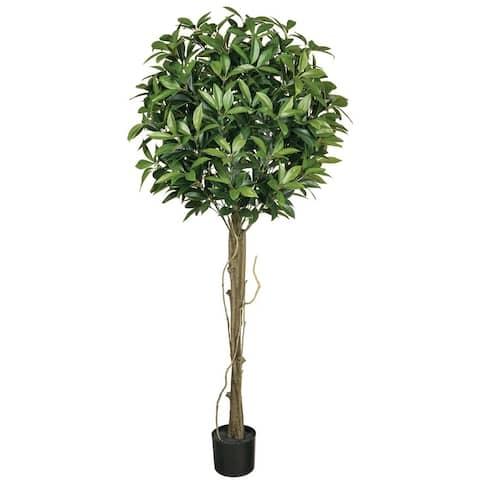 Potted 5' Shikiba Tree