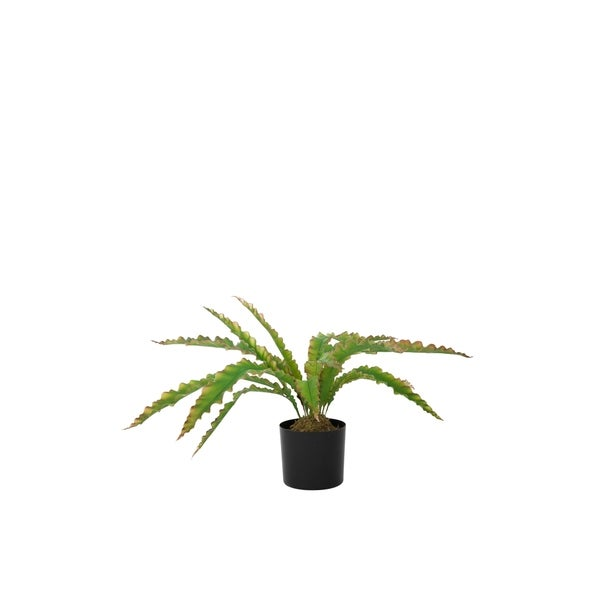 Laura Ashley 33.5 In. H Real Touch Agave Succulent
