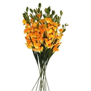 12 30-in Long Stem Gladiola