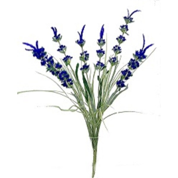 "21"" Lavender bush x 6"