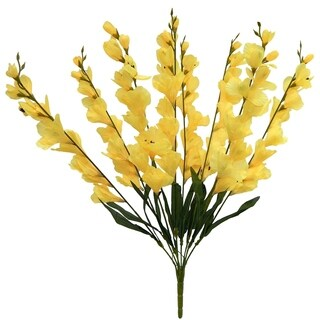 "26"" tall Gladiolus bush x 8"