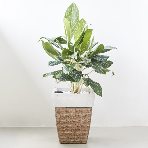 Airlie Square Wicker Smart Self-Watering Planter in Sandy Brown. Opens flyout.