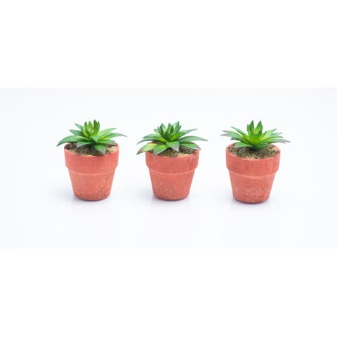 Red Vanilla Set of 3 Mini Succulents in Terracotta Centerpiece