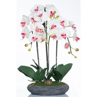 Red Vanilla White/Cream Phalaenopsis in Charcoal Ceramic Centerpiece