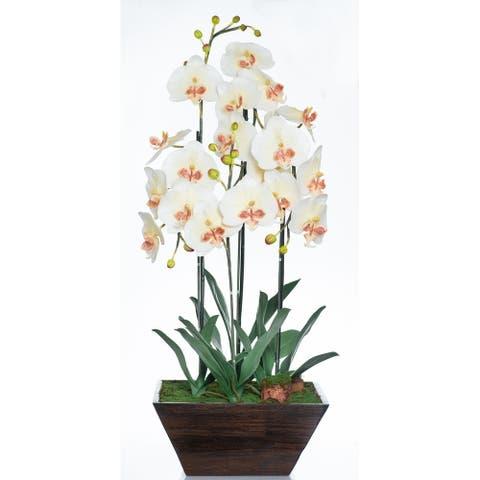 Red Vanilla White / Cream Phalaenopsis Orchid in Wooden Centerpiece