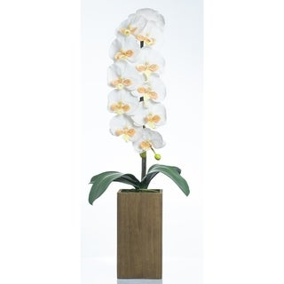 Red Vanilla White / Yellow Phalaenopsis Orchid