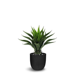 Eulophia Artificial Green Faux Botanical - 28 Inch