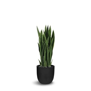 Sanseveria Artificial Green Faux Botanical - 39 Inch