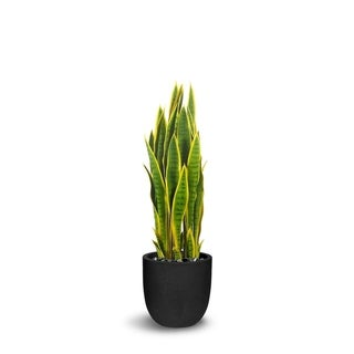 Sanseveria Artificial Green/Yellow Faux Botanical - 39 Inch