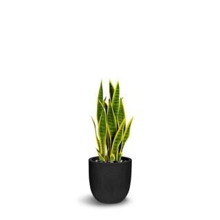 Sanseveria Artificial Green/Yellow Faux Botanical - 32 Inch