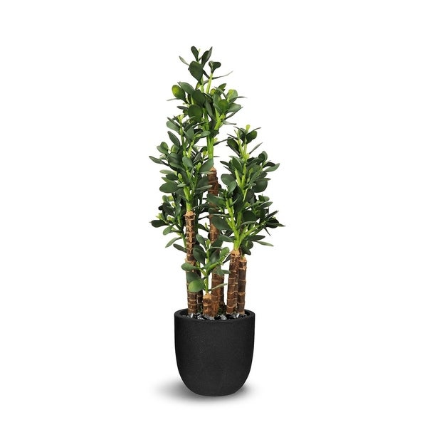 Jade Plant Artificial Faux Botanical - Green - 35.5 Inch