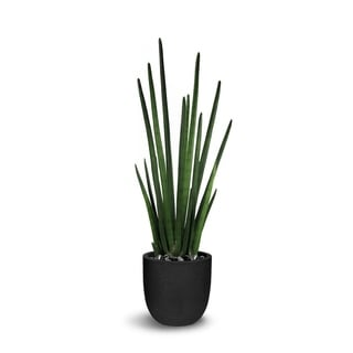Le Present Sansevieria Green 41-inch Cylindrica Faux Botanical