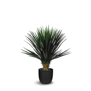 Le Present Yucca Rostrata Green Faux 35-Inch Artificial Plant with Black Resin Round Pot