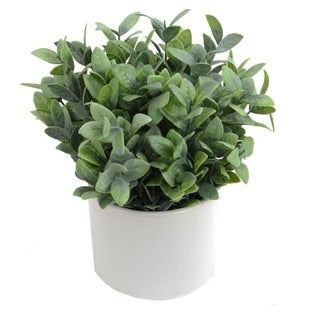 Artificial Frosted Ruscus Plant with Ceramic Pot. - Green
