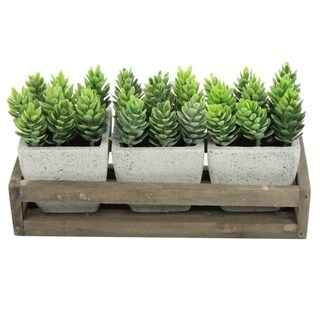 Summer Succulents in wooden tray Set of 3 Pots, Green