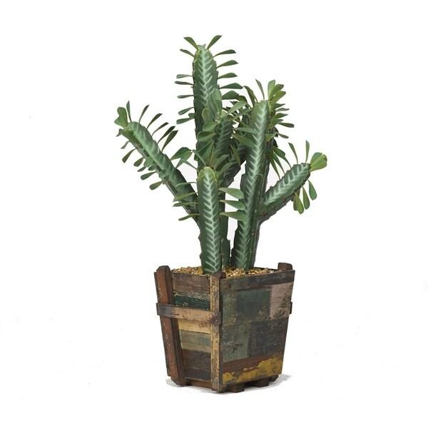 D&W Silks Cactus in Square Wooden Planter
