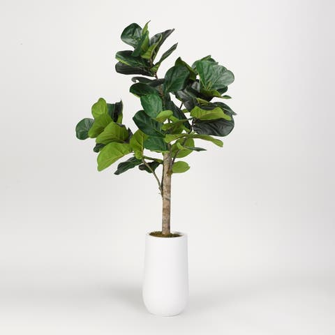 D&W Silks 5.5-feet Fiddle Leaf Fig Tree in Tall Round White Resin Planter