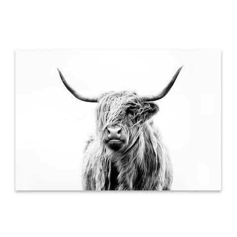 Noir Gallery Highland Cow Scotland Photo Metal Wall Art Print