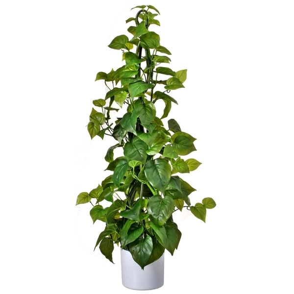 3-FT. Potted Natural touch climbing philodendron