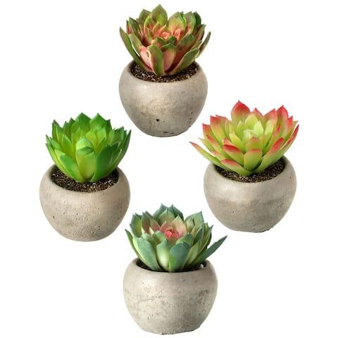 """Potted Kale Succulent 3.5"""" 4 Piece Set"""