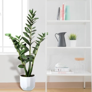 """Potted Natural Touch Money Plant In Ceramic 35"""""""