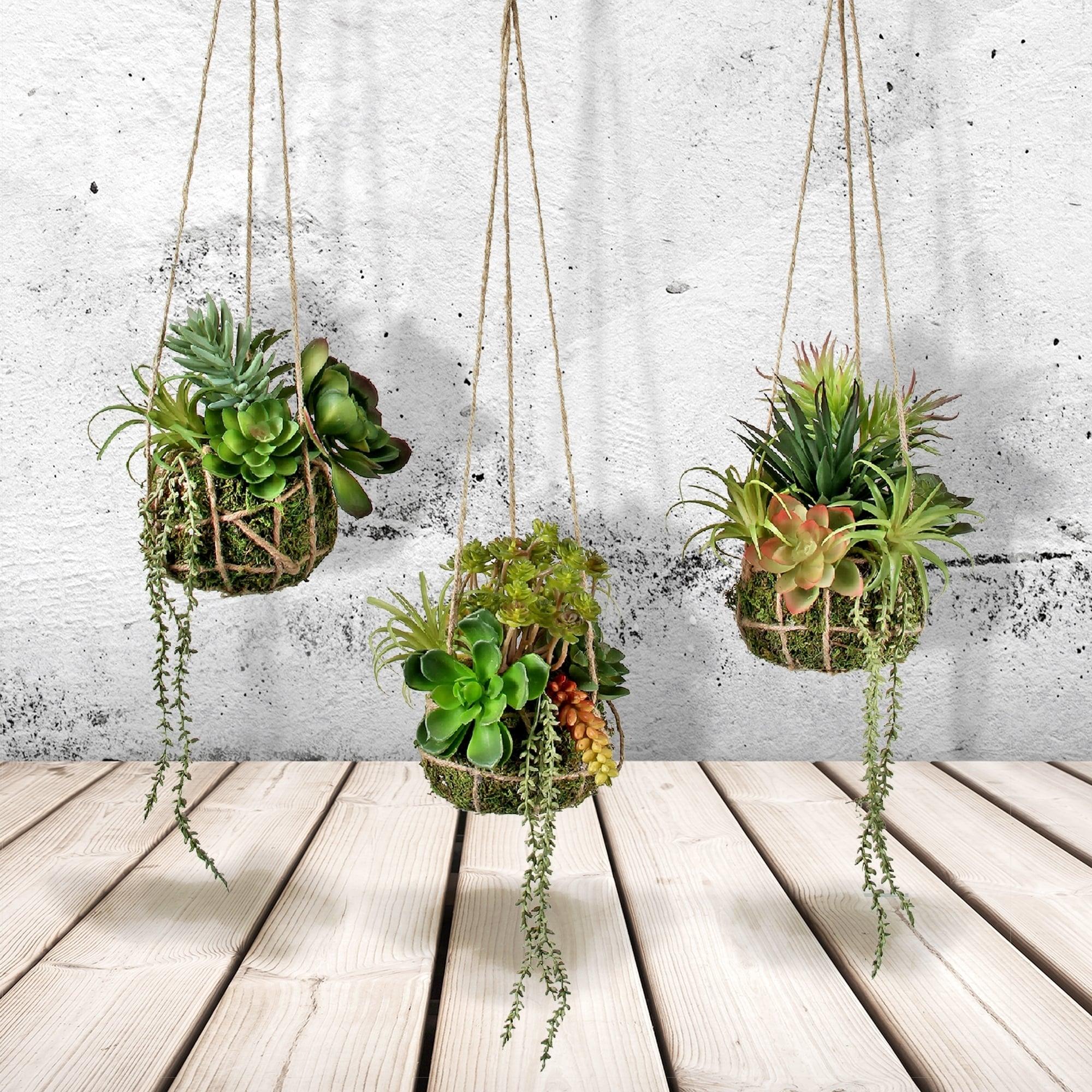 Plastic Hanging Succulent In Root Ball 24 3 Piece Set Overstock 28353246
