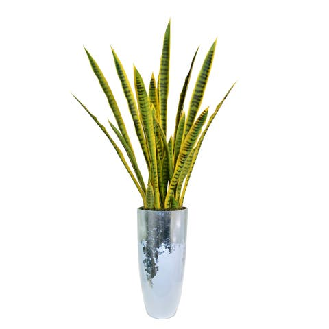 "Laura Ashley 65.5"" Tall Snake Plant (Sansevieria) Artificial Lifelike Faux in Resin Planter"