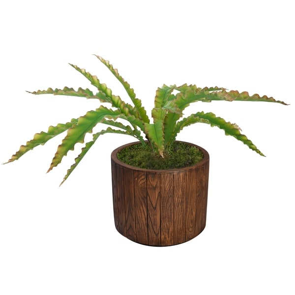 """Laura Ashley 38.5""""H Real touch agave in Fiberstone Planter"""