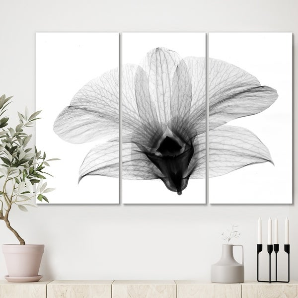 Designart 'Dendrobium On Back X-Ray Orchid' Premium Cottage Canvas Wall Art - 36x28 - 3 Panels