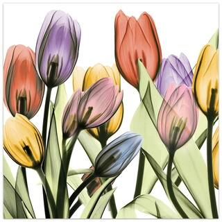 """Tulip Scape x-ray I"" Colorful Flower Wall Art on Frameless Free Floating Tempered Glass Panel - Multi-Color"