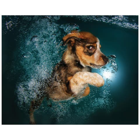 """""""Foxhound Pup"""" Dog Wall Art on Frameless Free Floating Tempered Glass Panel - Blue/Brown"""