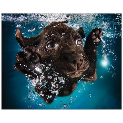 """""""Black Lab"""" Dog Wall Art on Frameless Free Floating Tempered Glass Panel - Blue/Brown"""