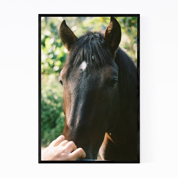 Noir Gallery Horse Animal Wildlife Hawaii Framed Art Print