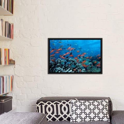 "iCanvas ""Ocean Fish Coral Reef"" Framed Canvas Print"