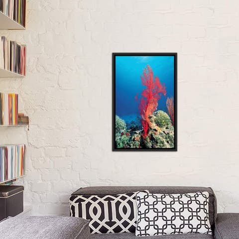 """iCanvas """"Red Coral"""" Framed Canvas Print"""