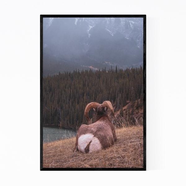 Noir Gallery Bighorn Sheep Jasper Park Alberta Framed Art Print