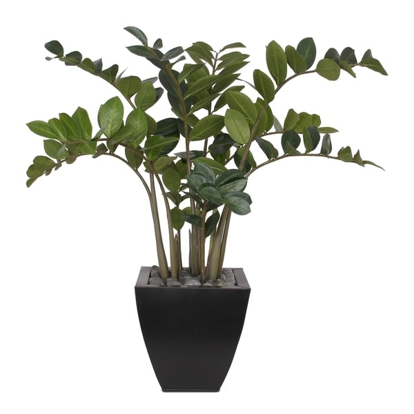"37""H ZZ Plant with Black Pebbles in a Modern Black Zinc Pot"