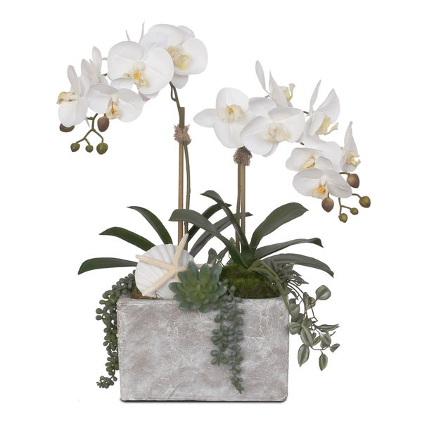 Real Touch Cream White Orchids with Seashell in Stone Wash Pot