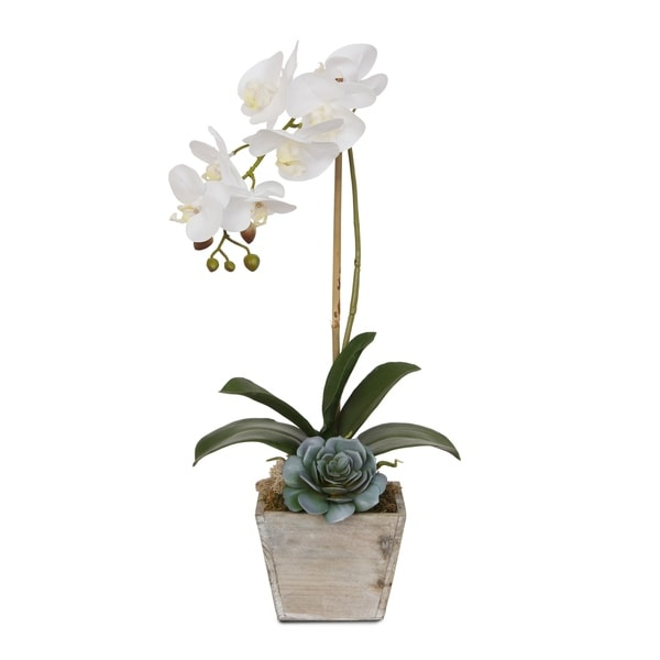 Real Touch White Orchid in a Coastal Washed Wooden Pot