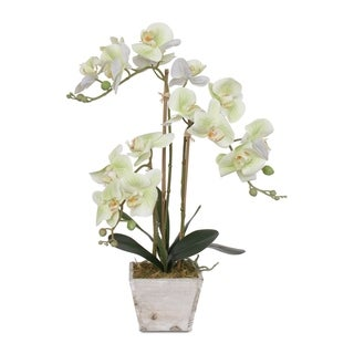 Real Touch Green Phalaenopsis Orchids in a White Wash Wood Pot