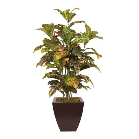 Colorful 4' Croton Tree in Brown Metal Pot