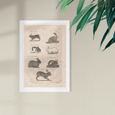 Wynwood Studio 'Lepus Rabbits' Animals Framed Wall Art Print - Black, Brown - 13 x 19