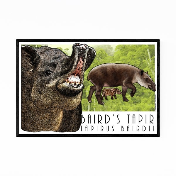 Noir Gallery Baird's Tapir Animal Illustration Framed Art Print