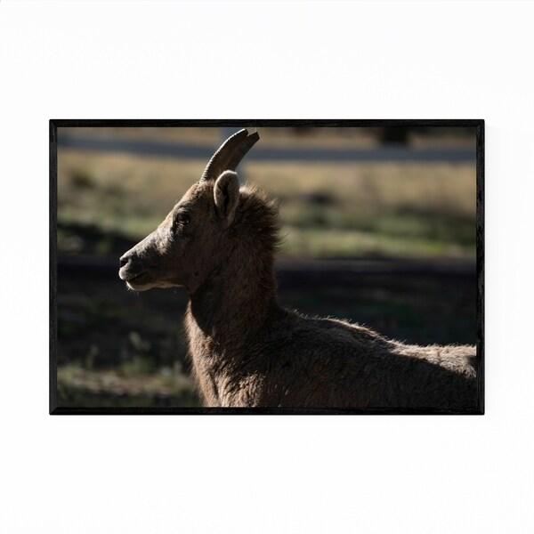 Noir Gallery Bighorn Sheep Greer Arizona Photo Framed Art Print