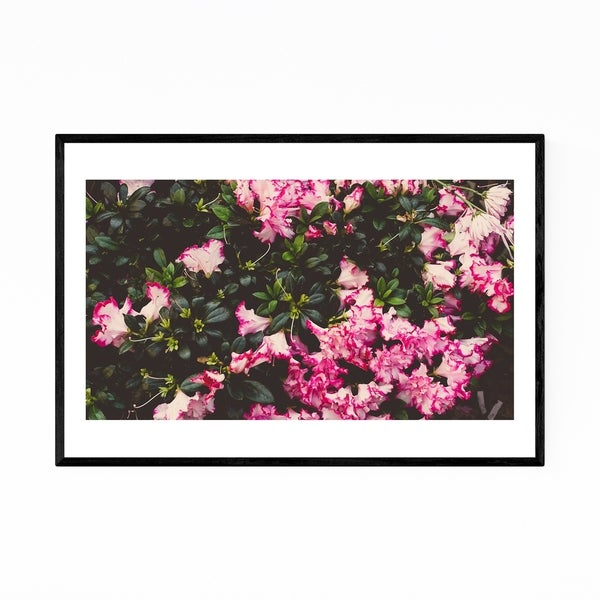 Noir Gallery Floral Botanical Abstract Framed Art Print