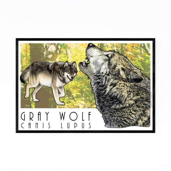 Noir Gallery Gray Wolf Animal Illustration Framed Art Print