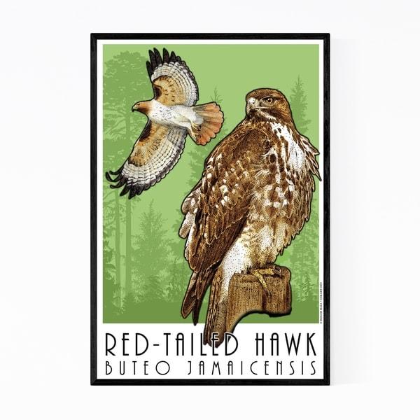 Noir Gallery Red-Tailed Hawk Animal Illustration Framed Art Print